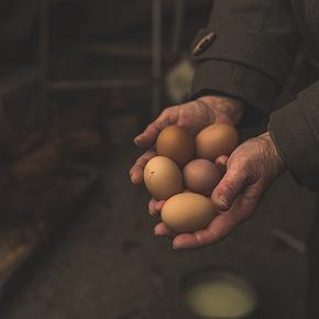 rękawice przetwórstwo spożywcze